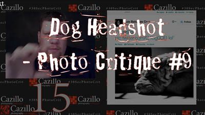 Dog Headshot - Photography Critique #9
