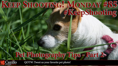 Pet Photography Tips - Part 2